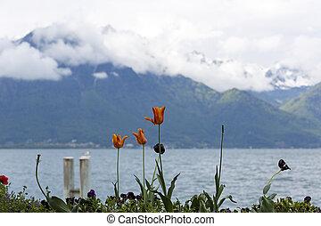Tulips at the lake shore