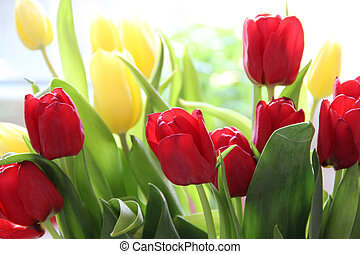 Tulips  - Beautiful mix of vivid multicolored tulips