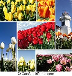 tulips, colagem