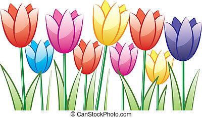 tulips, colorito, mazzo