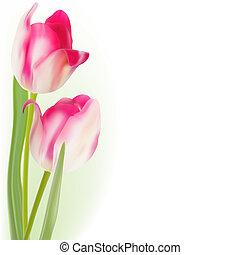 tulips, eps, isolado, experiência., 8, branca