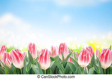 tulips, flores, capim, verde, primavera