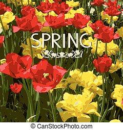 tulips, flores