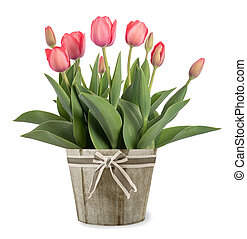 tulips flowers in vase