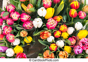 Tulips for sale at a markt