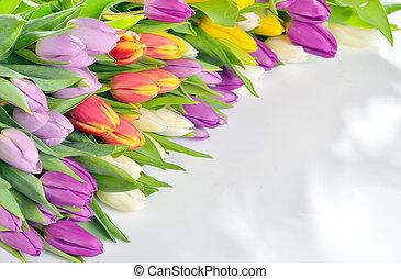 Tulips frame on white