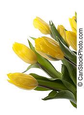 tulips, fresco, amarela, caule