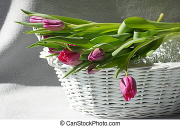 Tulips in a basket.
