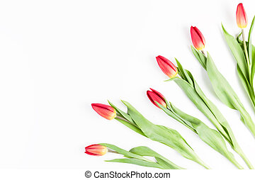 Tulips in a corner of the frame on a white background