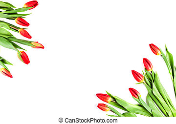 Tulips in corners of the frame on a white background
