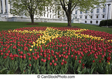 Tulips in front of State Capitol