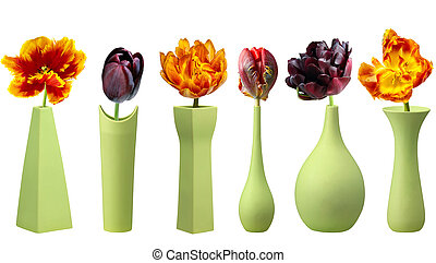 Tulips in green vases on white background