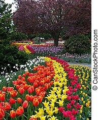 Tulips in Skagit valley in Washington State, USA