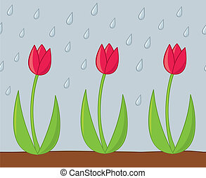 Tulips in the Rain - Spring tulips being nourished during a...