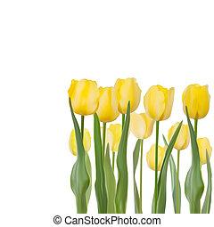 Tulips isolated on white background. EPS 8