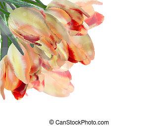 Tulips isolated on white. EPS 10