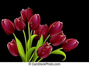 tulips, isolato, sfondo nero, rosso, mazzo