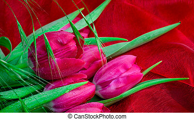 tulips on red background