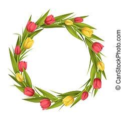 tulips, quadro, isolado, amarela, círculo, flores, branco vermelho