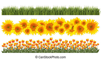 tulips, springtime, tema, girassóis, fronteiras, capim