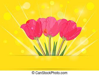 tulips, su, giallo, bokeh., primavera, fondo., vettore, eps10.