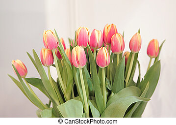 Tulips - Tulpen - Tulips on white Background - Tulpenstrauss...