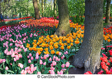Tulips under the trees in spring