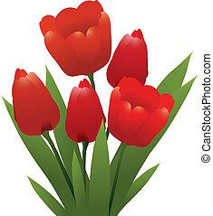 tulips, vettore, rosso, mazzo