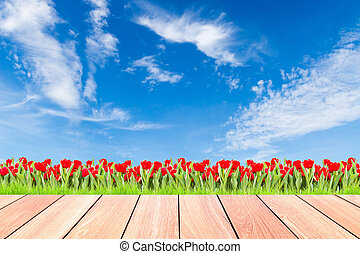 tulips with green grass against blue sky and plank wood