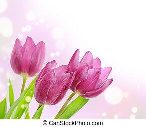 tulp, witte bloemen