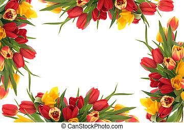 tulpan, blomma, gräns