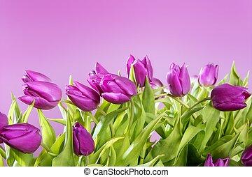 tulpaner, rosa blommar, rosa, ateljé fotograferade