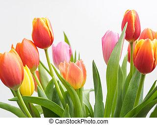 tulpen, blumengesteck
