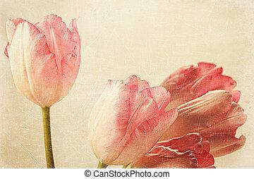 tulpen, gefühl, altes , weinlese