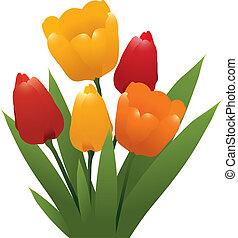 tulpen, gele, vector, sinaasappel, bos, rood