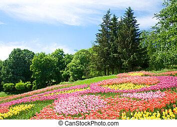 tulpen, helder