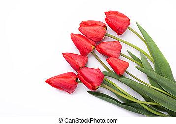 tulpen, op, een, witte , achtergrond.