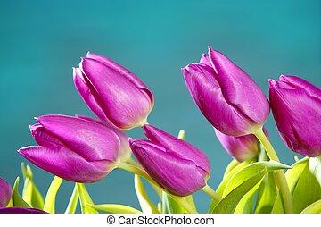 tulpen, rose bloemen, blauw groen, studio vuurde