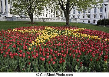 tulpen, vor, staatliches kapitol