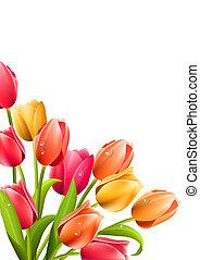 tulpen, witte , bos, achtergrond, groot
