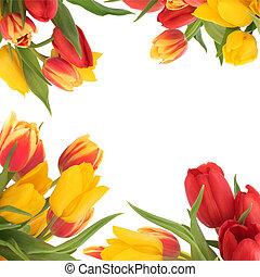tulpenblüte, blume, umrandungen