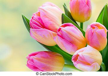 tulpenblüte, blumengebinde, fruehjahr, flowers., hintergrund., bokeh