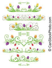tulpenblüte, ränder, fruehjahr