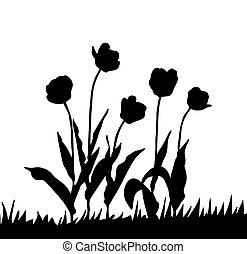 tulpenblüte, weißes, vektor, zeichnung, hintergrund