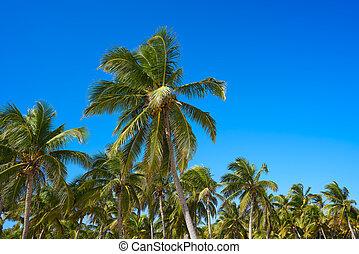 Tulum palm trees jungle on Mayan Riviera beach