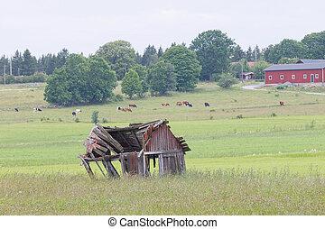 Tumbledown barn on a field