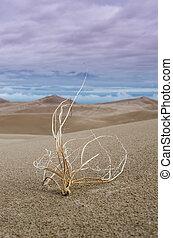Tumbleweed in Sand Dunes Vertical