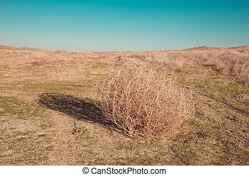 Tumbleweed on the field