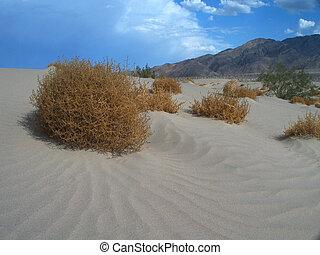 tumbleweed - deserts tumbleweeds set against a blue sky and...