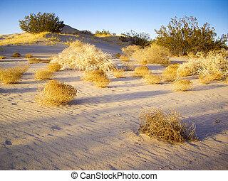 tumbleweeds, deserto mojave